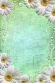 Abstract background with white daisy on grange background — Stock Photo