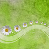 Abstract background with white daisy and a space for a tex — Stock Photo