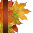 Autumn colored maple leaves — Stock Photo #3781506