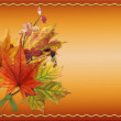Autumn colored maple leaves — Stock Photo