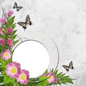 Cadre sur fond avec daisy rose et papillon — Photo