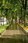 Beautiful alley in Odessa — Stock Photo