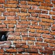 Brick wall and Jackdaw sitting — Stock Photo