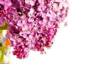 Bouquet of lilac on white. Isolation. — Stock Photo