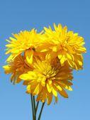 Beautiful yellow flowers on a blue sky. — Stock Photo