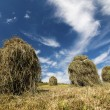 Himaycocks on the meadow and blue sky — Stock Photo