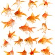 Set of goldfishes - Stock Photo