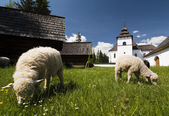 Old village with sheeps — Stock Photo