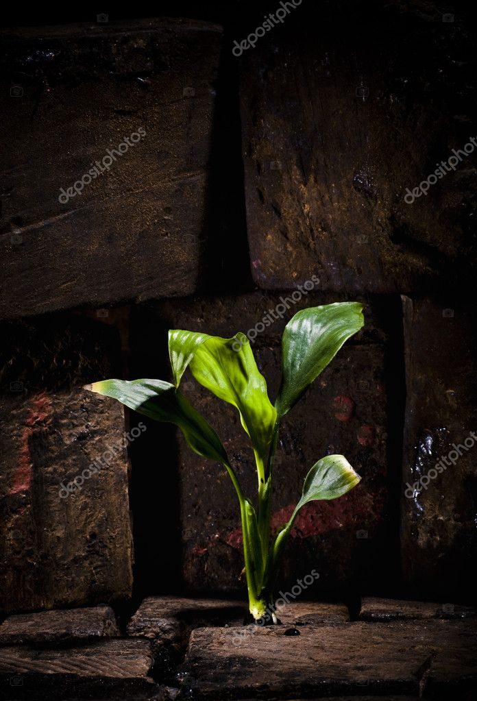 Green plant growing trough dead ground — Stock Photo #3547928