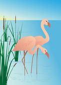 Pink flamingos on lake with canes — Stock Vector