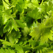 Parsley — Stock Photo #3103299