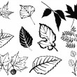 Stock Photo: Set of various leaves