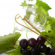 Stock Photo: Wine carafe and young grape branch