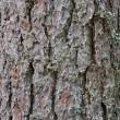 Pine tree bark texture — Stock Photo #3528176