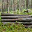 Logs in the woods — Stock Photo