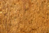 Structure of the ancient hardened mahogany. — Stock Photo