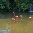 Pink flamingos on lake with waterfalls in rainorest. — Stock Photo