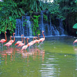 Royalty-Free Stock Photo: Pink flamingos on lake with waterfalls in rainorest.