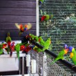 Parrots sit round a washstand. - Stock Photo