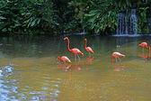 Fenicotteri rosa sul lago con cascate in rainorest. — Foto Stock
