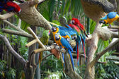 Parrots in rainforest. — Stock Photo