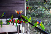 Parrots sit round a washstand. — Stock Photo