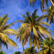 Stock Photo: Coconut sky of peninsulSantubong. Borneo.