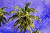 The coconut sky of peninsula Santubong. Borneo. — Stock Photo