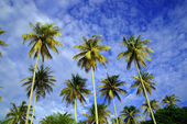 The coconut sky of peninsula Santubong. Borneo. — Stock Photo