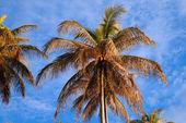 El cielo de coco de península santubong. borneo. — Foto de Stock
