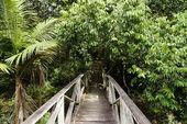 In an island Borneo jungle. — Stock Photo