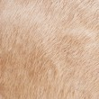Cow skin background — Stock Photo