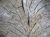 Cut tree — Stock Photo