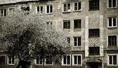 дерево & дом — Стоковое фото