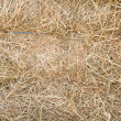Hay — Stock Photo