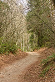 Path through Trees of Forest — Stock Photo