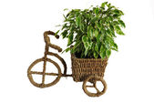 Bicycle flower pot — Stock Photo