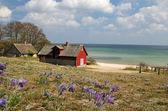 Spring sea landscape — Stock Photo