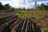 Destroyed forest — Stock Photo