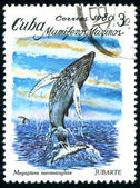 Postage stamp. Mamiferos Marinos. — Stock Photo