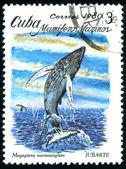 Postage stamp. Mamiferos Marinos. — Stock Photo