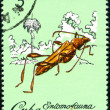 Cuban postage stamp — Stock Photo