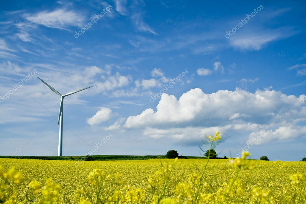 A windmill in a rape field on a background of blue sky — Stock Photo #3319087