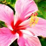 piękno kwiatów — Zdjęcie stockowe