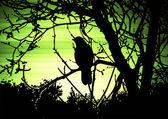 Bird enviroment — Stock Photo