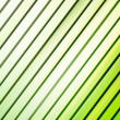 Green lines — Stock Photo