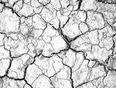 Cracked texture — Stock Photo