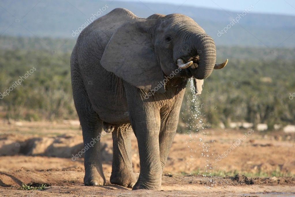 drinken Afrikaanse tantra