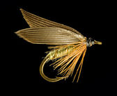 Trout Fishing Fly — Stock Photo