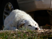 Ein hund, der seinen meister warten. — Stockfoto
